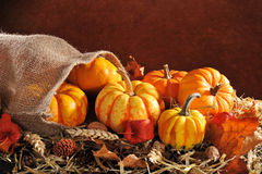 Pumpkins jute bag. Thanksgiving - different pumpkins in jute bag on straw with copyspace in front of brown background Royalty Free Stock Images