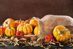 Pumpkins jute bag Royalty Free Stock Photography