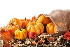 Pumpkins jute bag Stock Image