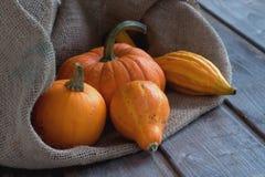 Pumpkins and jute poke Royalty Free Stock Image