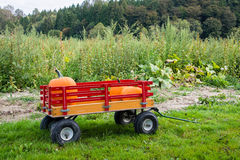 Pumpkins in a Kids Wagon. Pumpkins just picked from the pumpkin patch sit ready to be pulled in a kids toy wagon.  Horizontal. Copy space Stock Images