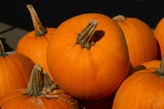 Pumpkins. Large orange pumpkins placed one above the other Royalty Free Stock Photo