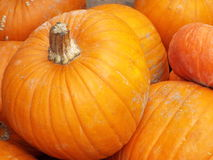 Pumpkins. Large yellow pumpkins lying in a shop window Royalty Free Stock Images