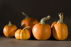 Pumpkins in late afternoon sunlight Royalty Free Stock Images