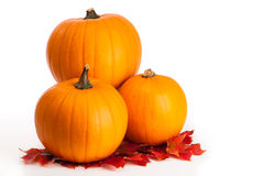 Pumpkins & Leaves royalty free stock images