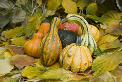 Pumpkins and leaves royalty free stock photo