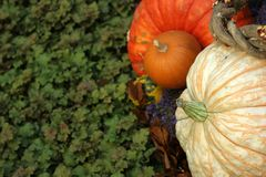 Pumpkins and leaves. Halloween and Thanksgiving stock image