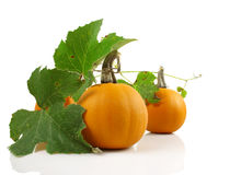 Pumpkins with leaves Stock Image