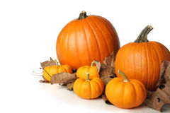 Pumpkins on leaves Stock Images