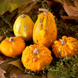Pumpkins and leaves Stock Photography