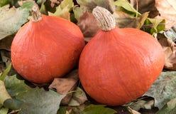 Pumpkins on leaves Stock Image