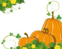 Pumpkins with leaves and flowers Stock Photos