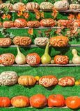 Pumpkins leaves on green background. Royalty Free Stock Photos