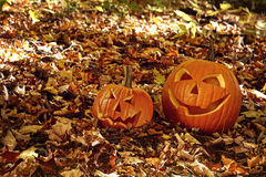 Pumpkins in leaves on the ground Royalty Free Stock Image