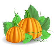 Pumpkins with leaves Stock Photography