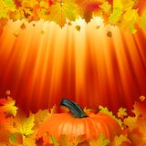 Pumpkins and leaves in the sun. EPS 8 Royalty Free Stock Image