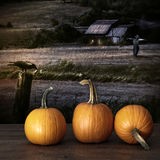 Pumpkins left on table at night Stock Photography