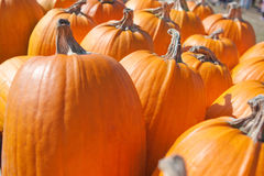 Pumpkins Lined up. Stock Images