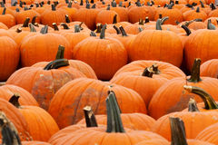 Pumpkins Lined up Stock Photography