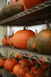 Pumpkins. A lot of pumpkins on the shelves Royalty Free Stock Images