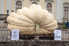 Pumpkins in Ludwigsburg,Germany Royalty Free Stock Photos