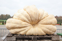 Pumpkins in Ludwigsburg,Germany Stock Images