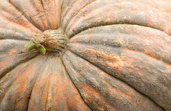 Pumpkins in Ludwigsburg,Germany Stock Photography