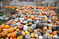 Pumpkins in Ludwigsburg,Germany Stock Photo