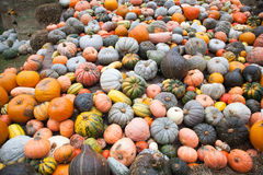 Pumpkins in Ludwigsburg,Germany Stock Image