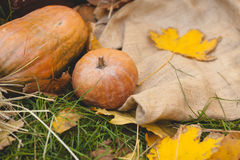 Pumpkins lying on the grass Stock Photography
