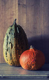 Pumpkins lying on the table stock images