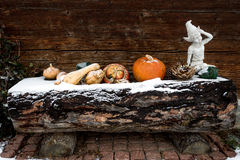 Pumpkins lying on wooden log covered by snow Stock Photography