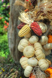Pumpkins and maize / corn stock photography
