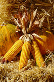 Pumpkins And Maize On Straw Royalty Free Stock Photography