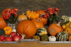 Pumpkins. Many colorful pumpkins side by side and one above the other Stock Photography