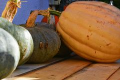 Pumpkins of many colors Stock Images