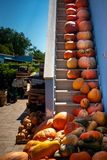 Pumpkins of many colour and size on a ladder stock photo
