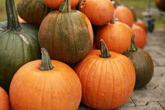 Pumpkins. Many pumpkins stacked on the ground Stock Photography
