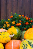Pumpkins, marigolds and wooden fence Stock Photography