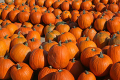 Pumpkins at the market Royalty Free Stock Images