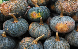 Pumpkins in the market. Hundreds of pumpkins at a farm market at harvest time in autumn Royalty Free Stock Photos