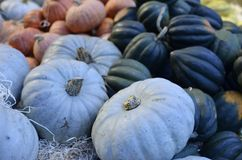 Pumpkins on the market. Different colored pumpkins at an organic market in Amsterdam Stock Photo