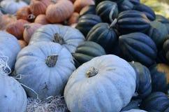 Pumpkins on the market Stock Photo