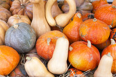 Pumpkins. Market in Forcalquier, Provence, France Royalty Free Stock Image