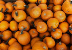 Pumpkins at the market for halloween or thanksgiving Stock Image