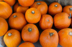 Pumpkins at the market for halloween or thanksgiving Stock Photo