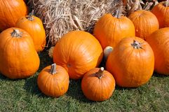pumpkins on market place Royalty Free Stock Images