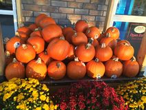 Pumpkins in a market Stock Images