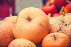 Pumpkins in the market. Stock Image