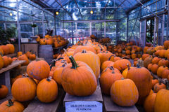 Pumpkins at the market Stock Image